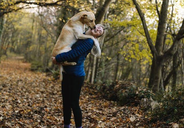CBD For Dogs, CBD Oil For Dogs in Chicago