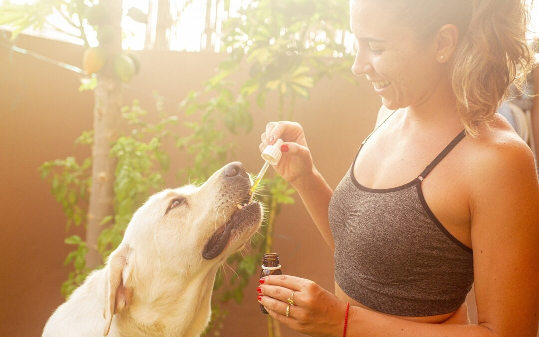 CBD Oil for Dogs and Pets – What You Need To Know